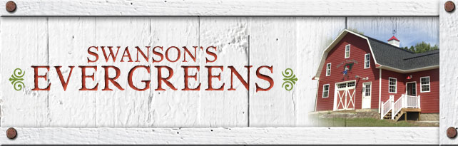 Swanson S Evergreen Nursery Niagara Wisconsin Whole